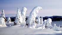 Snowghosts-at-Sunset-210x120.jpg